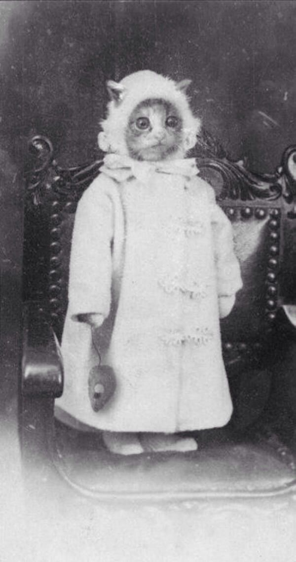 Even in the 1800's they were taking funny cat pics