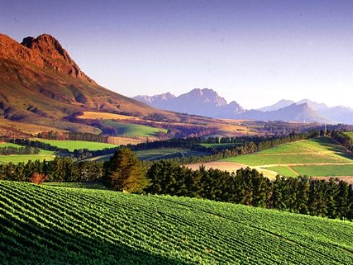 Honeymoon idea: Take a train-ride to wine-taste in Stellenbosch. Visit captive cheetahs at Spier winery (South Africa)
