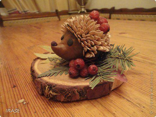 Поделка изделие Праздник осени Ежик на полянке Материал природный: