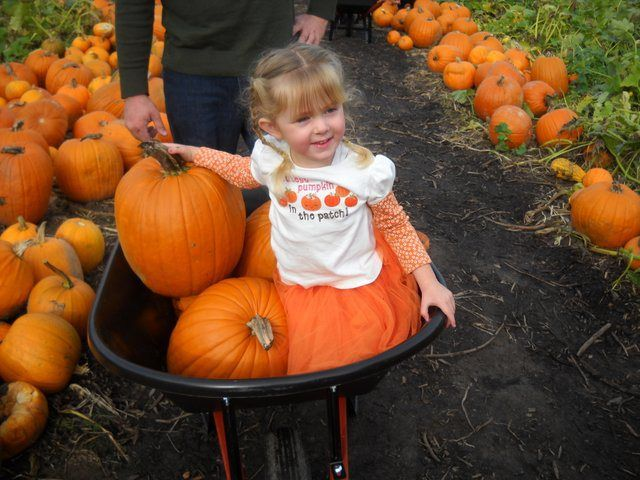 Nothing screams fall more than a trip to the pumpkin patch. Gather up your lil' punkins and read on for  a list of our favorite pumpkin patches—all within an hour's drive of the city.