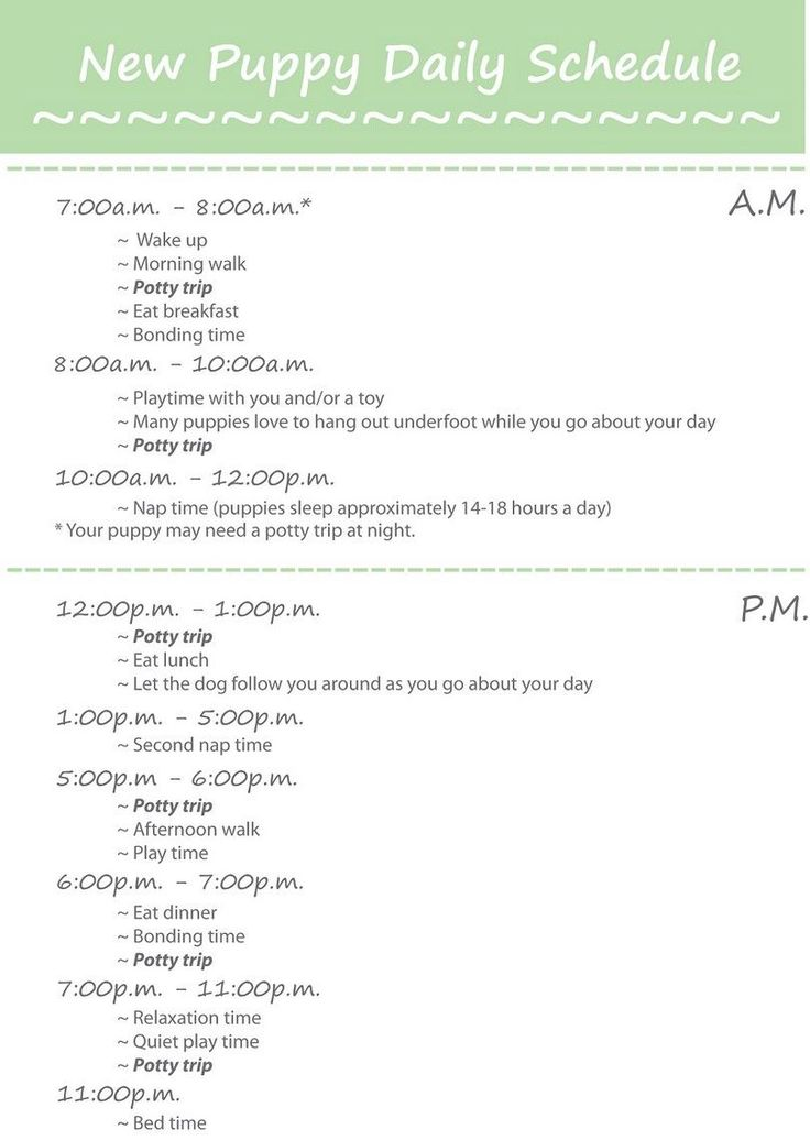Puppy daily schedule                                                                                                                                                                                 More