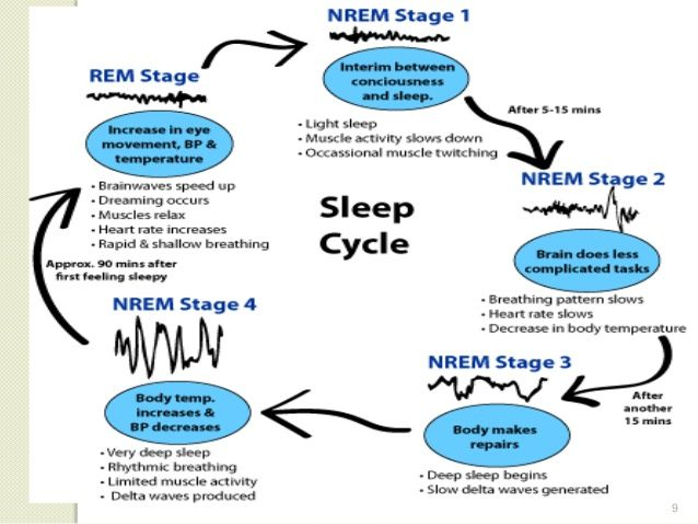 Image Result For Complete Sleep Cycle Muscle Twitching Sleep