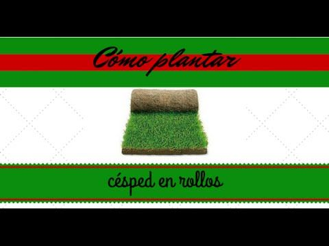 Como plantar césped natural en rollos (tepe). Installing natural grass in rolls. - YouTube
