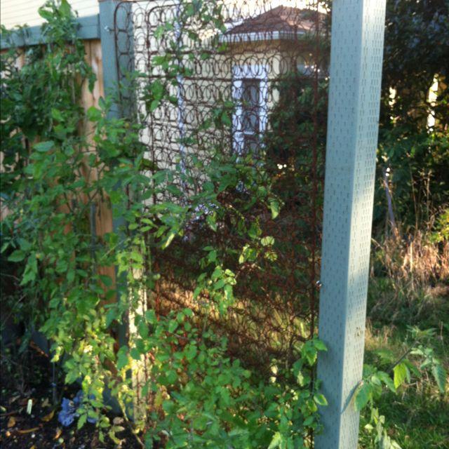 Old Mattress Springs For Climbing Plants Garden