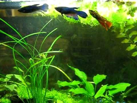 176 best images about fish tanks nature on for Betta fish sleeping