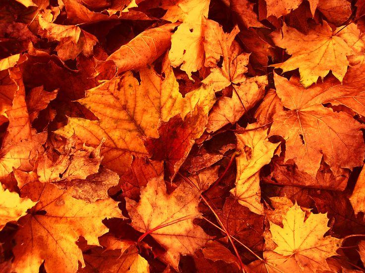 best 25 fall leaves wallpaper ideas on pinterest fall