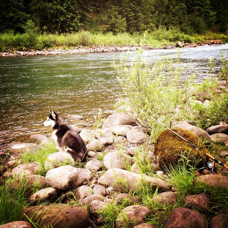 Mina Harker Husky Wolf for life!
