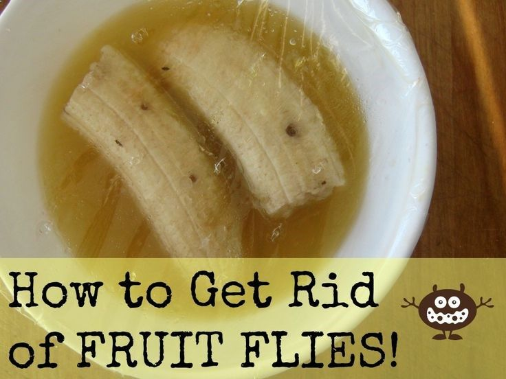 The Easiest Way To Get Rid Of Fruit Flies Our Nourishing