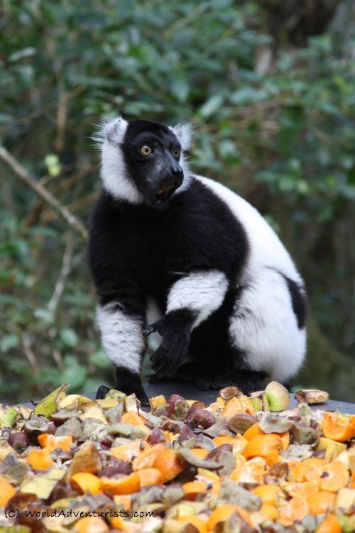 Monkeyland - South Africa