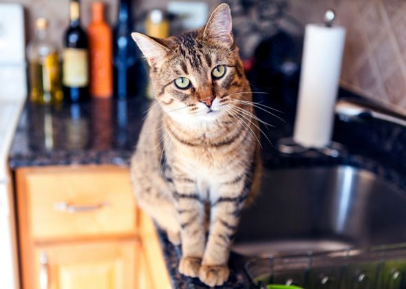 Does your cat cry at night, claw at furniture or scratch during play? We've got the behavior and training tips you need to help solve these problems and more.