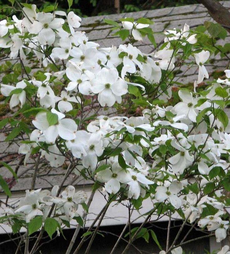 15 Feng Shui plants