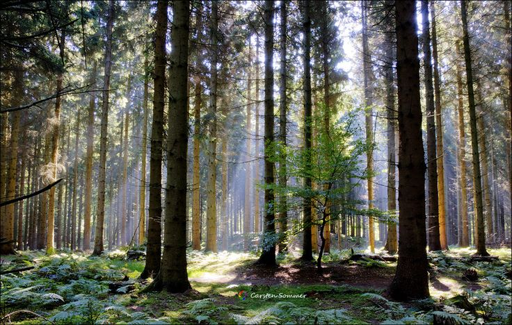Photograph Forest Light by Carsten Sommer on 500px