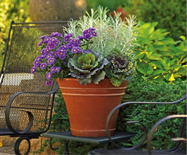 PHOTO: Fall container garden with cabbages, asters, and curry plant.
