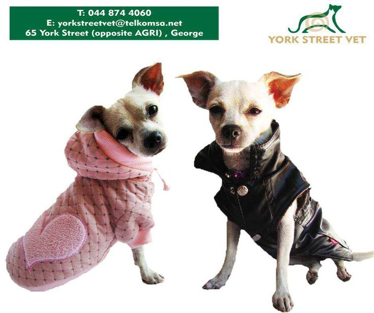 Dog clothing is more than just an old blanket, it includes #dog coats, dresses, jumpers, hoodies, T-shirts. Get everything you need to dress your pooch in style from #YorkStreetVet. #ilovemydoghttps://www.facebook.com/Yorkstreetvetshop/photos/pb.646016452164207.-2207520000.1439134251./811369198962264/?type=3