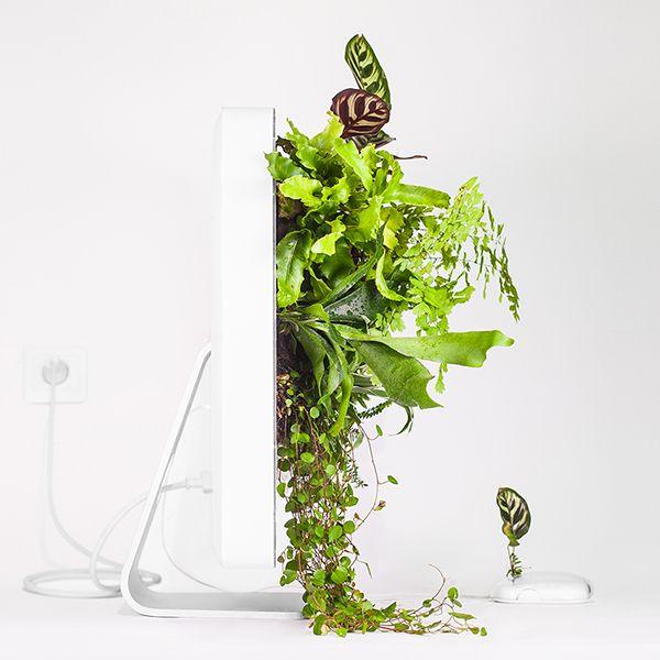 Monsieur Plant © 2017 • Plant your Mac! • Macplants • Imac G5 / 1990