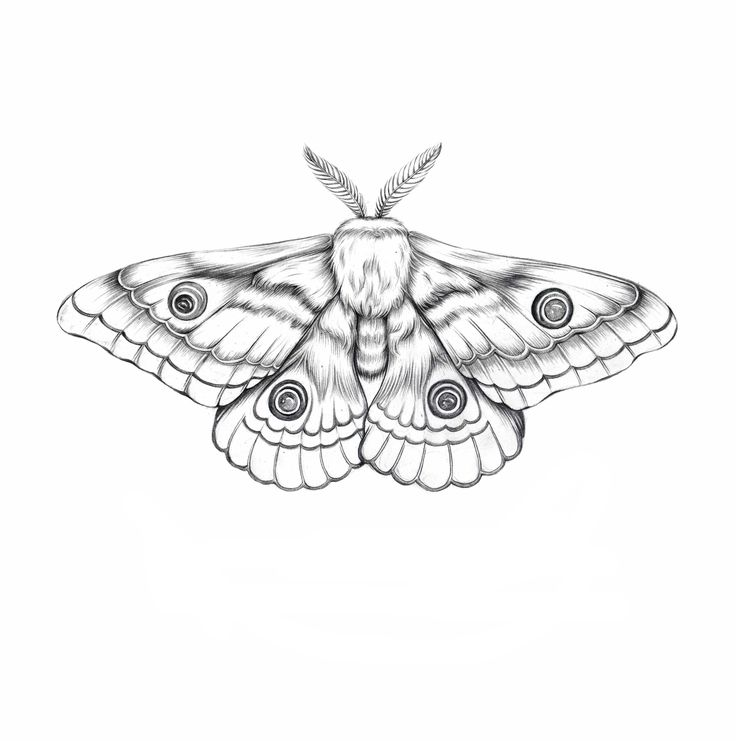 Moth Illustration                                                                                                                                                                                 More