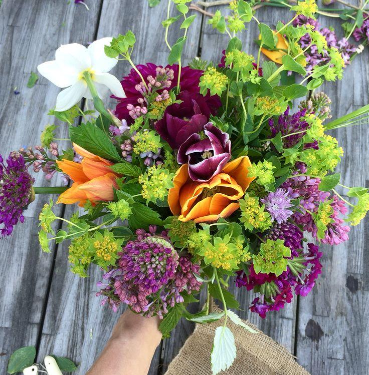 Organic tulips, allium, cosmos and wild flowers, vildevioler.dk