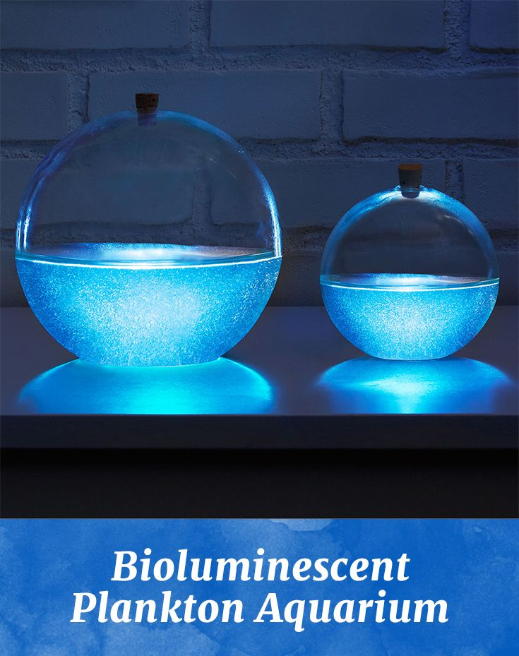 Give the gift of natural illumination! These tiny bioluminescent plankton illuminate in a spherical environment when you gently swirl it.