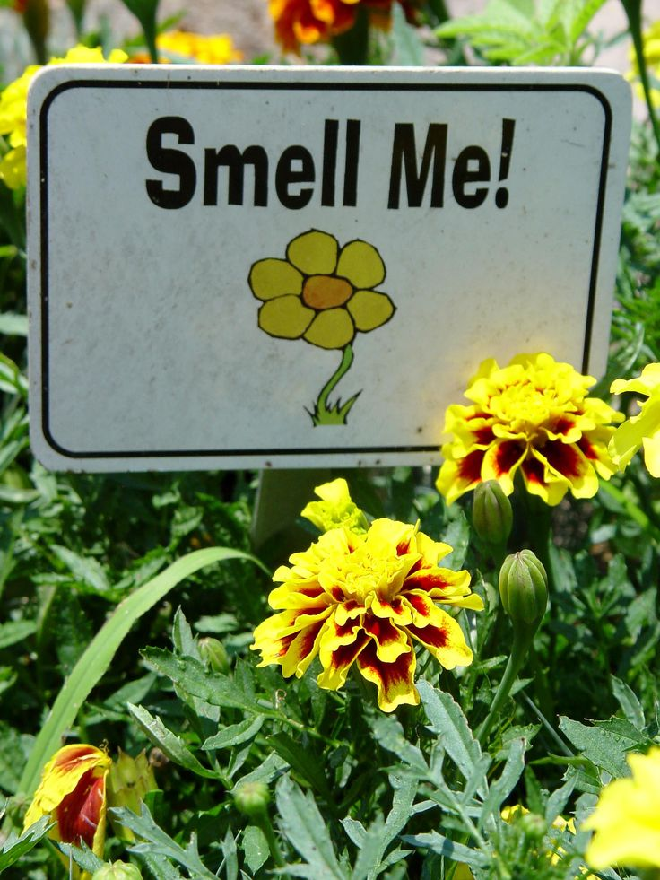 """""""Smell Me"""" is a friendly invitation to your sensory garden guests to interact with fragrant plants."""