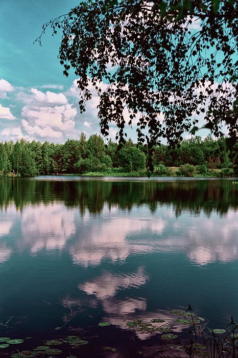 George Westermak Photograph - beautiful forest lake in Sunny summer day by…