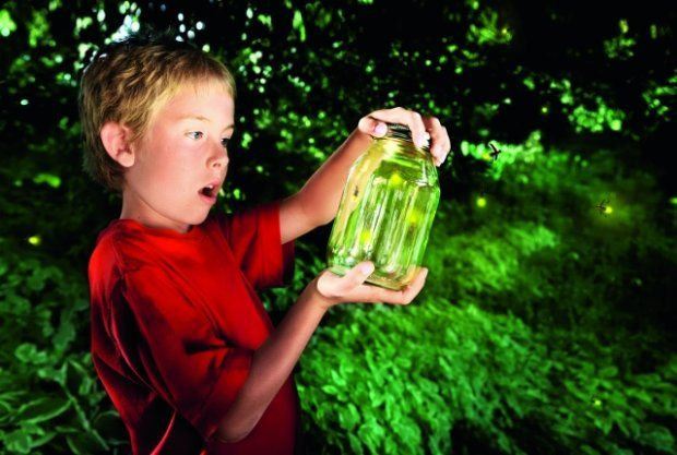 Znalezione obrazy dla zapytania świecace rosliny