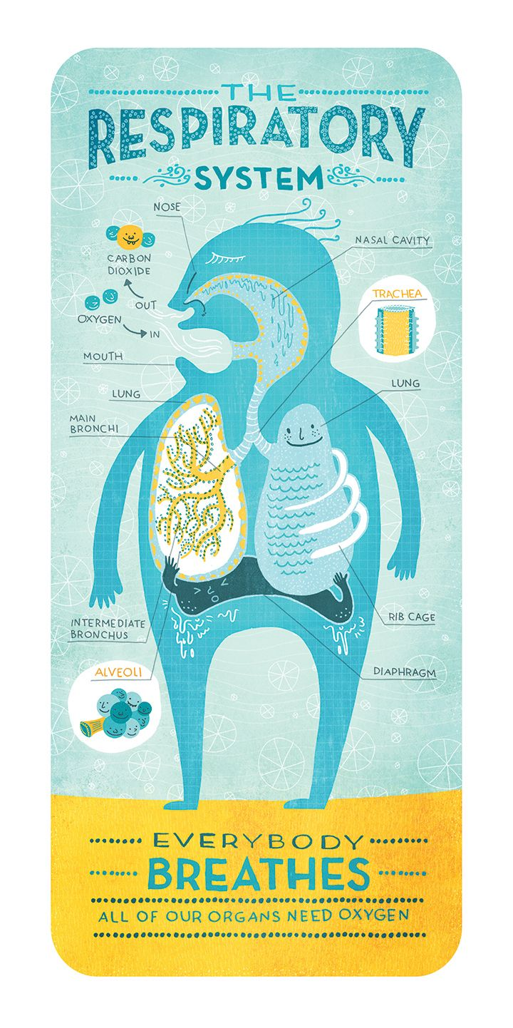 BODY SYTEMS — Rachel Ignotofsky Design
