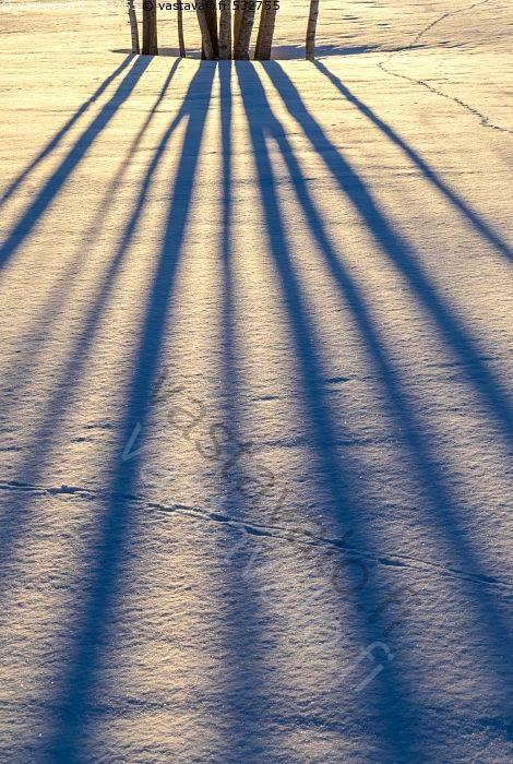 Kevättalvea - lumi lumihanki keväthanki puiden varjot varjo puut koivu koivut Betula kevätilta ilta lumijäljet kevättalvi