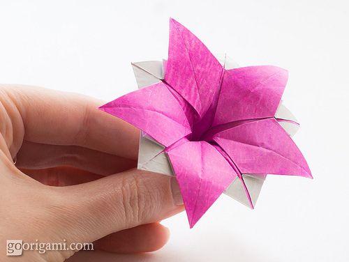 Origami Flower Ipomeia Rubra