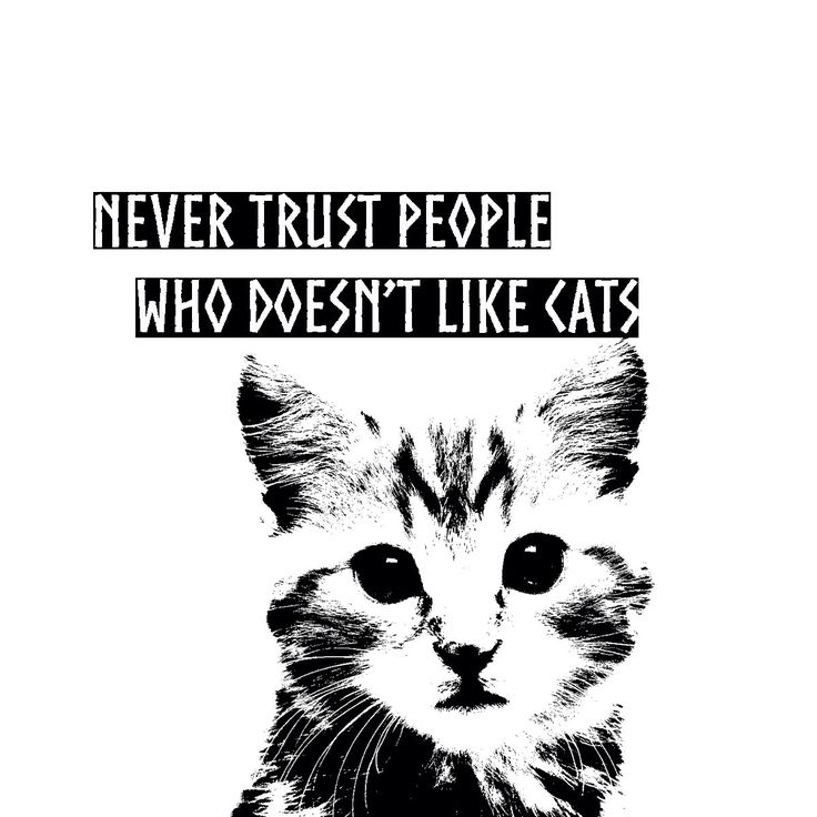 Le chouchou de ma boutique https://www.etsy.com/ca-fr/listing/450792610/aimant-magnet-never-trust-a-people-who  #cats #cat #crazycatlady #crazycatpeople #magnet #humor