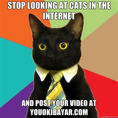 Stop looking at Cats ...