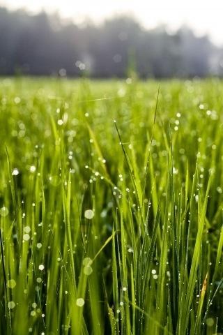 Het gras is groener aan de overkant.
