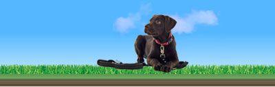 Recall training a stubborn dog