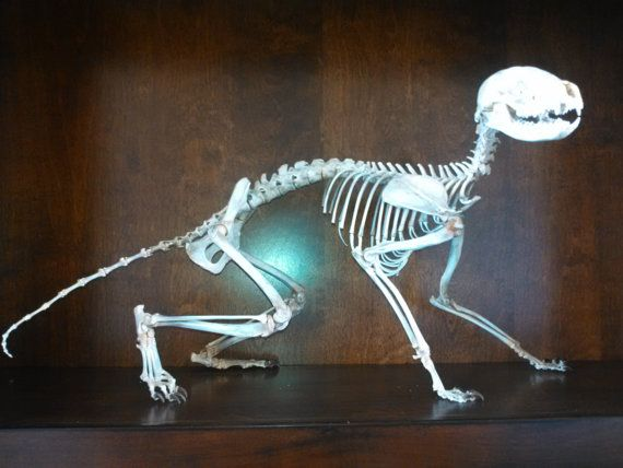 189 best Bone Articulation images on Pinterest