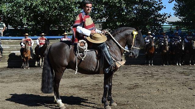 Chilean horse purebred- Caballo Chileno de pura raza record since 1893. Santa Ana de Pile EL RELINCHO
