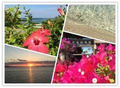 沖縄セラピーツアー開催  沖縄のエメラルドの海と澄み切った空  南国系のカラフルな花たち  自分の全てを受け入れて  ありのままに  究極の癒しと回復の三日間  沖縄セラピーマスターコース  癒しのセラピーツアー開催  2017年2月24日金2月26日日  詳細はこちらをご覧ください http://ift.tt/2jTaaoh  ご興味のある方はぜひお問合せ下さい  アイディアヒューマンサポートアカデミー福岡校 TEL092-737-1668 MAILfukuoka@idear.co.jp URLhttp://www.idear.co.jp/   #ネイチャーセラピー #アートセラピー #アニマルセラピー #沖縄 #アイディアヒューマンサポートアカデミー #心理カウンセラー #メンタルトレーナー #カウンセリング #メンタルトレーニングー  tags[福岡県]