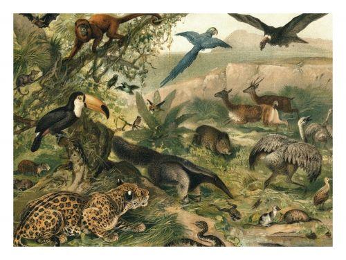 Eksotisk plakat med botanisk dyretrykk fra The Dybdhal. Orginalbilde er fra tidlig 1800-tallet, og har blitt lett restaurert og digitalisert.Tøff poster som vil gi hjemmet en tropisk atmosfære.Størrelse og materiale: 70x100 cm.Plakaten er printet på matt papir.