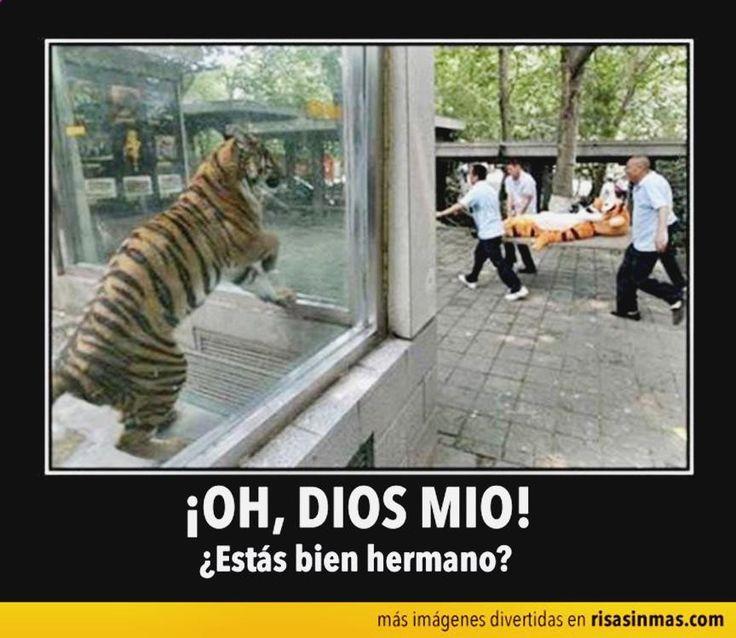 ✷✷✷ Ríe sin parar con memes en espanol dia de madresmemes espanol mexico, gifs animados para whatsapp, memes brexit, gifs search engine y como criar gifs animados ➢➢ http://www.diverint.com/memes-graciosos-espanol-2016-empiezan-confusiones/