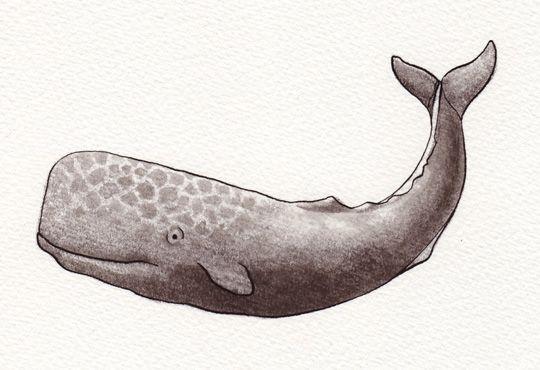 Sperm whales cosmetics curious