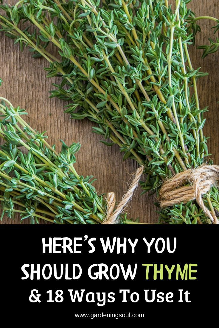 Here are the reasons why thyme deserves a place in every garden. #thyme #thymeuses #growingthyme