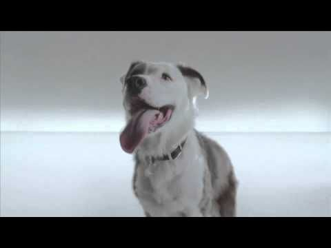 Adopt a Shelter Pet : The Humane Society of the United States