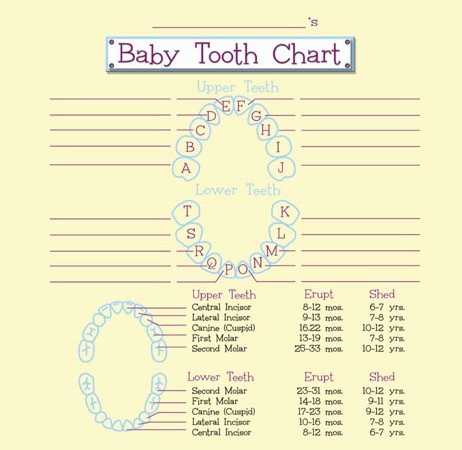 The  Best Tooth Chart Ideas On   Baby Teething Chart
