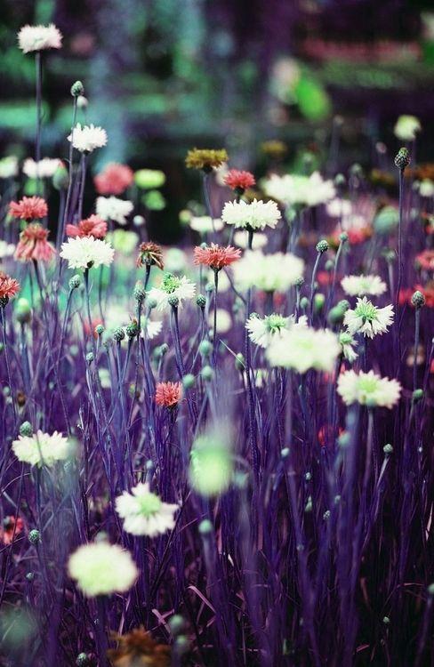 .purple  love