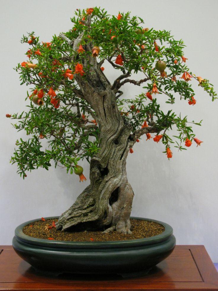 Wie man sich um einen Bonsai kümmert – Die Grundprinzipien seiner Pflege