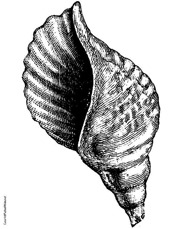 Broken Conch Shell Lord Of The Flies Lord Of The Flies Adam Guffey