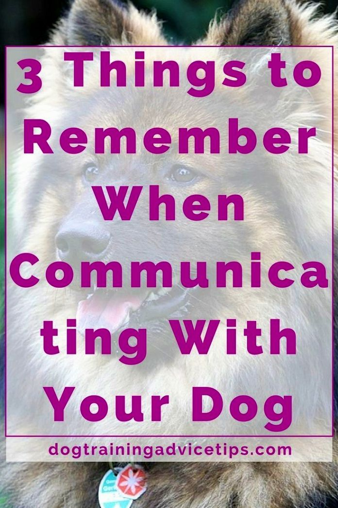 Dog Training Ideas Among The First Things To Teach Your Puppy To