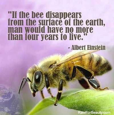 The Europeans get! When do we?    http://www.stuartwilde.com/2013/05/a-win-for-the-bees-eu-votes-to-ban-bee-harming-pesticides/  A Win for the Bees: EU Votes to Ban Bee-Harming Pesticides | Stuart Wilde | The Official Author Website