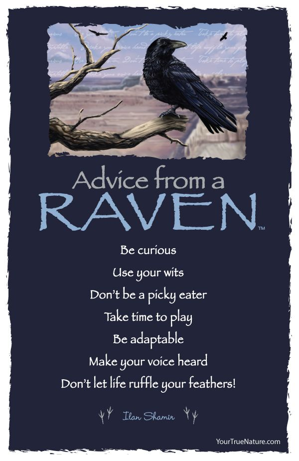 Advice from a Raven - Postcard - Your True Nature