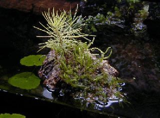how to make a planted pond