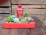 Succulents. How to grow. Everything you need to know!