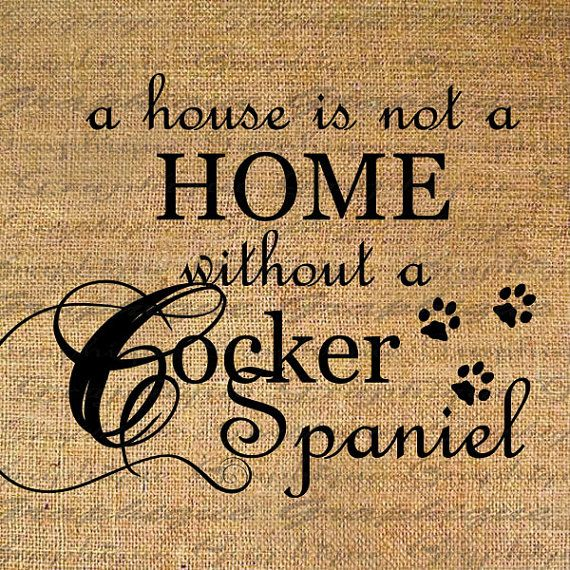 A house is not a home without a Cocker Spaniel